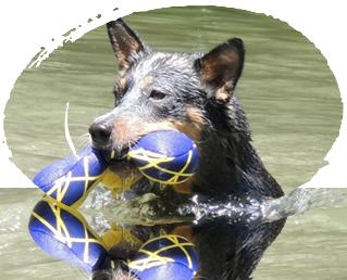 foto - about dogs italia - educazione e addestramento cani bologna
